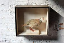French Partridge Circa 1865-85.